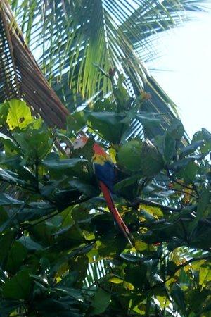 Saladero Eco Lodge : scarlet macaw at saladero