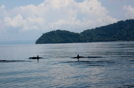 Saladero Eco Lodge: dolphins in Golfo Dulce