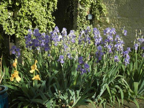 Auberge du Mas de la Feniere: De magnifiques iris à l'entrée du mas