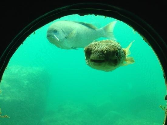 Kushimoto Marine Park Aquarium: 説明文を追加