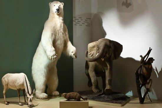 Musee d'Histoire Naturelle de Lille: La salle des mammifères