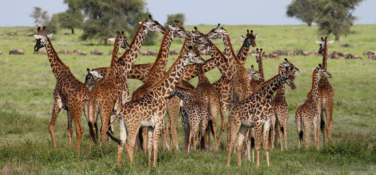 Foto de Arusha National Park