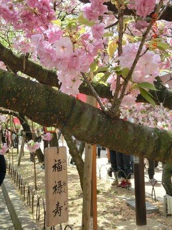 Japan Mint: 'Happiness, prosperity and longevity' cherry blossom