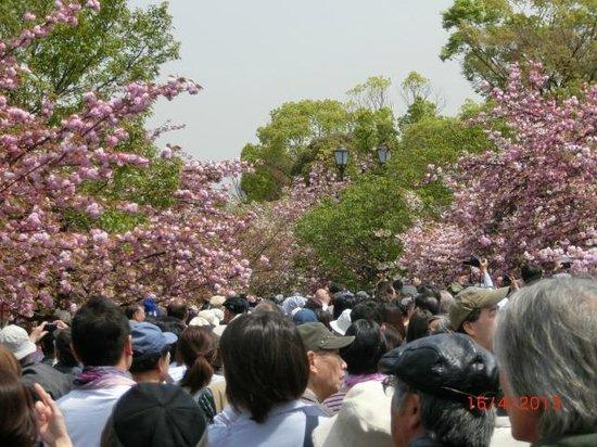 Japan Mint: So many visitors