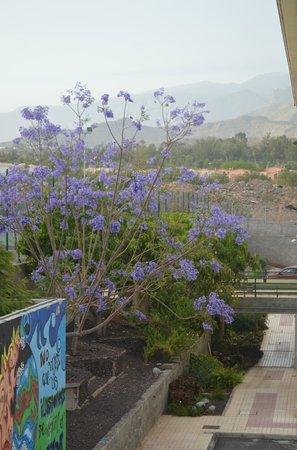 Marola Park : vue de l hotel