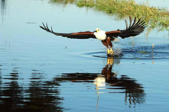 Pangolin Voyager Houseboat: fish eagle