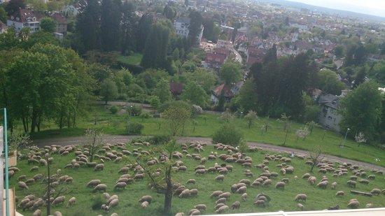 Mercure Hotel Panorama Freiburg: Vue de notre chambre sur quelques parcelles au bord de la route #1