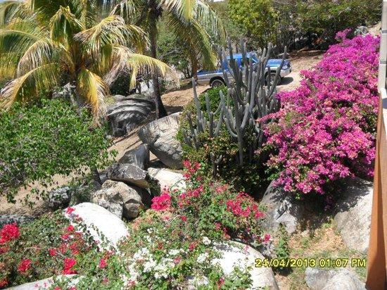 The Baths: giardino botanico