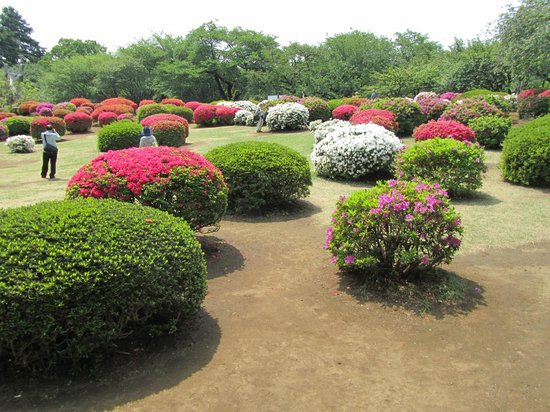 Shinjuku Gyoen National Garden : Colourful flowers are dancing around