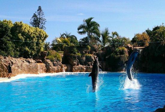 Show de los delfines picture of loro parque puerto de la cruz tripadvisor - Loro parque puerto de la cruz ...