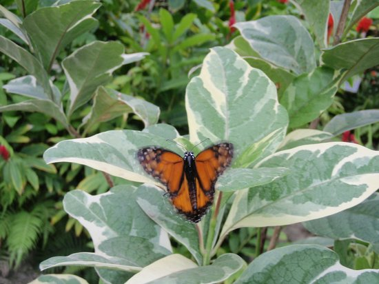 Hotel La Plantation: Butterfly farm