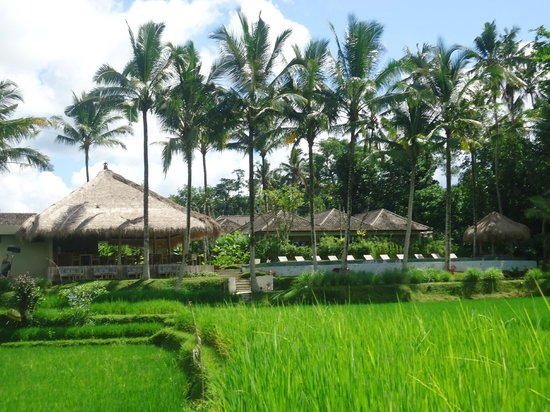 "Mathis Retreat: From the ""romantic dinner"" bungalow you have a view of the entire hotel surrounded by rice field"