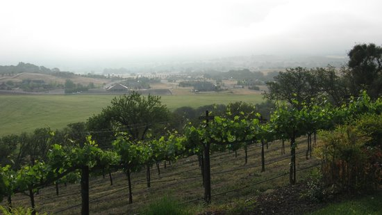 Seven Quails Vineyards Bed & Breakfast: View from room