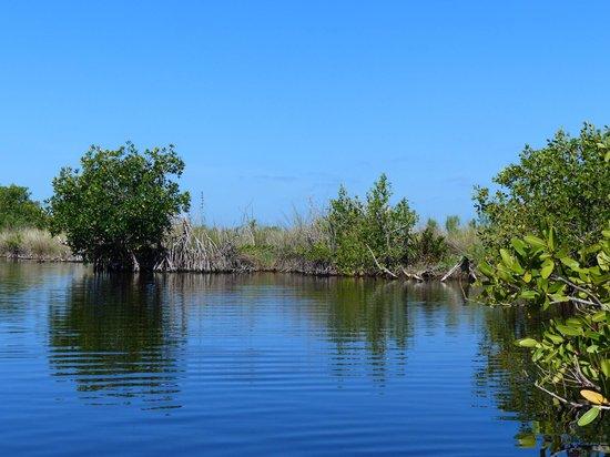 Tour the Glades - Private Wildlife Tours : Les Sawgrass