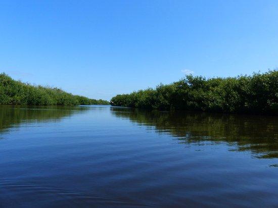 Tour the Glades - Private Wildlife Tours : La mangrove