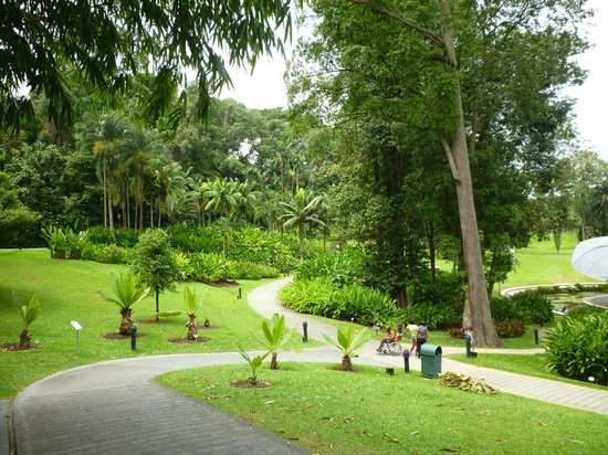 Walking on lily pads picture of singapore botanic for Au jardin singapore botanic gardens