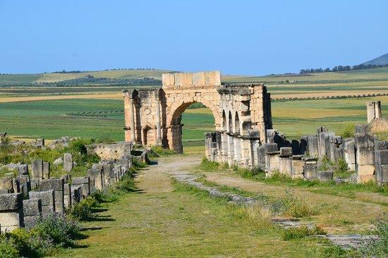 Chrif Trans Volubilis Day Trips: ruine de Volubilis