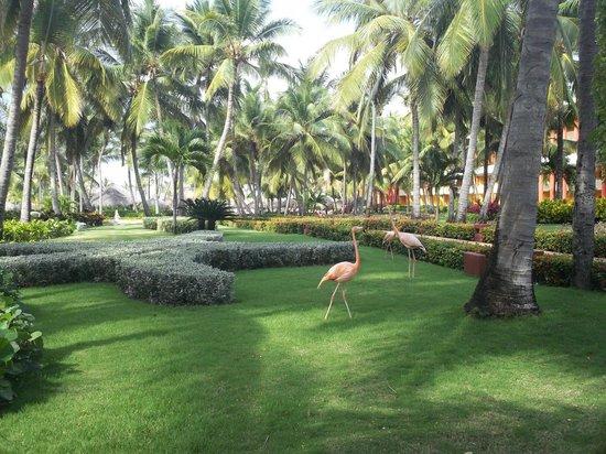 Iberostar Punta Cana: vista jardines del hotel