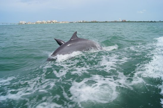 Clearwater, FL: Mama & Baby Dolphin