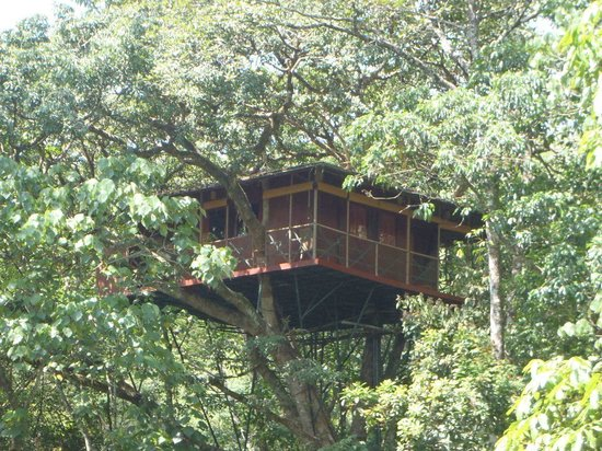 Tree House Lodging In New England