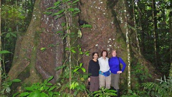 La Selva Amazon Ecolodge: the rainforest