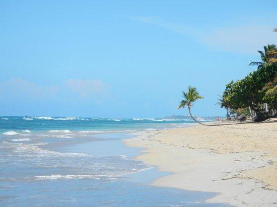 Sirenis Punta Cana Resort Casino & Aquagames: Praia