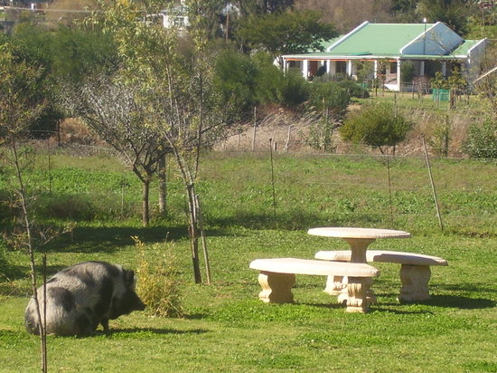 Tradouw Guesthouse: The large Gardens of The Guesthouse with Pricilla Queen of the Little Karoo