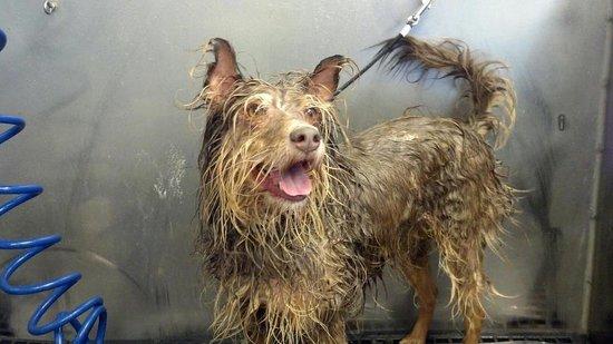 Canine Creek Dog Wash & Pet Boutique