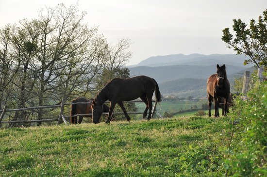 Agriturismo Fattoria di Statiano: campagna toscana....