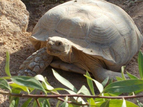 Djerba Explore: Other animals