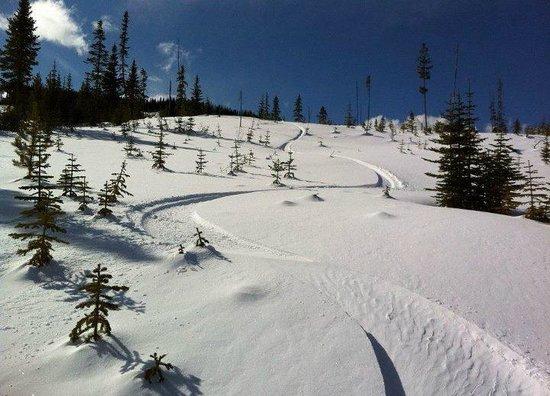 Mt Timothy Ski Area : fresh powder