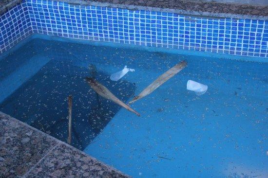 LABRANDA Aqua Fun Marrakech: état des bassins