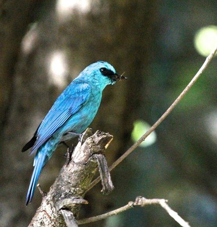 Jungle Lore Birding Lodge: Not to forget the gorgeous birds!