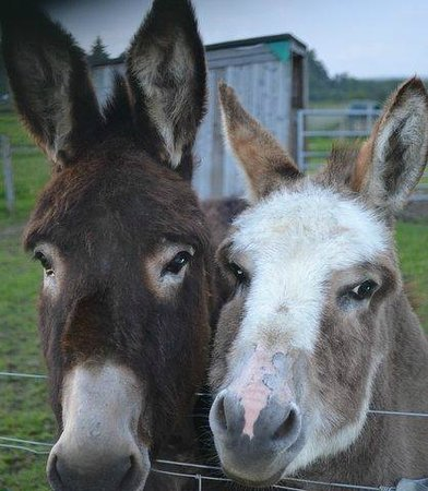 Robertson's The Larder Tomich Farm Shop and Childrens Farm: SALLY AND CHARLIE THE DONKEYS