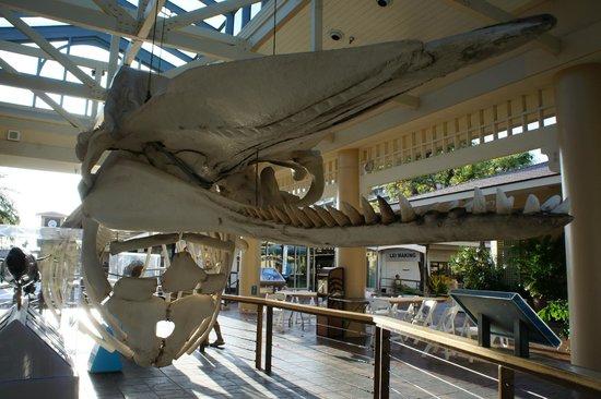 Whalers Village Museum : Whale bones