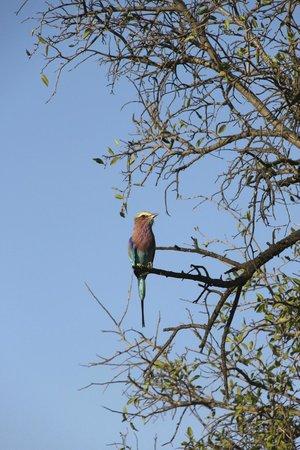 Jaci's Tree Lodge: een echt meidenvogeltje met die mooie kleuren