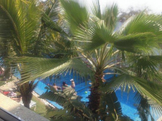 Hotel Fiesta Palmar : Desde la habitación!