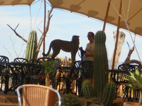 Inverdoorn Game Reserve Safaris: Lunch with a cheetah