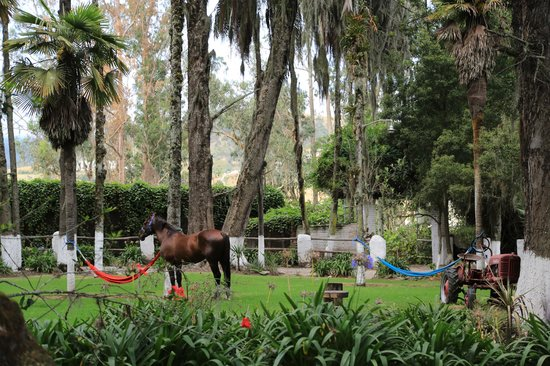 Hacienda Pinsaqui: Gardens and Horse Pasture
