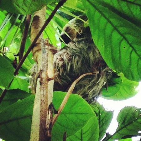 Hotel La Diosa: Two Toed Sloth Taking A Nap.