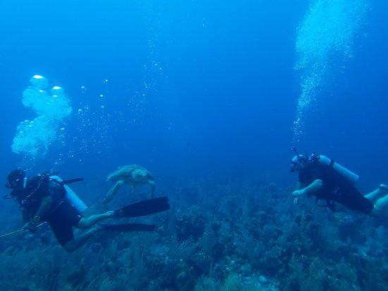 Blackbird Caye Resort: Turtle