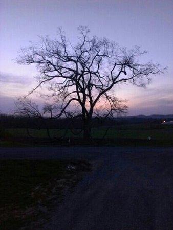 red elm at Arboretum