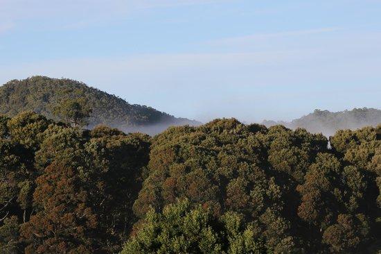 Tarkine Wilderness Lodge: View