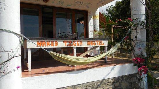 Naked Tiger Hostel: Hangmat
