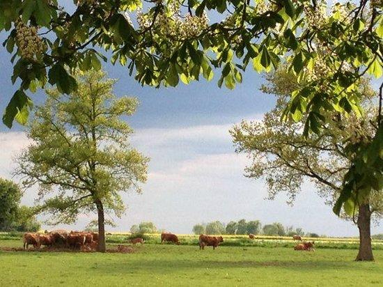 Appleton's Farmhouse : Countryside near B&B
