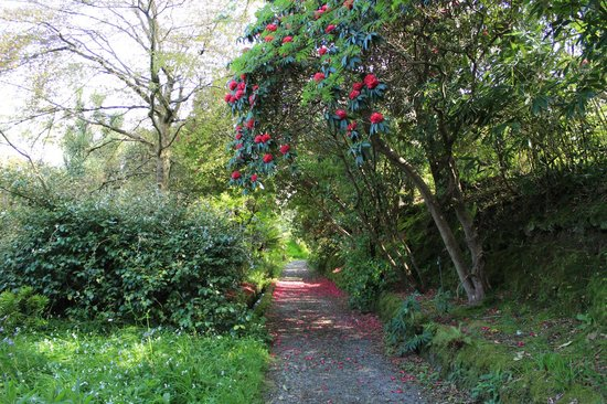 Mount Usher Gardens: trees in flower
