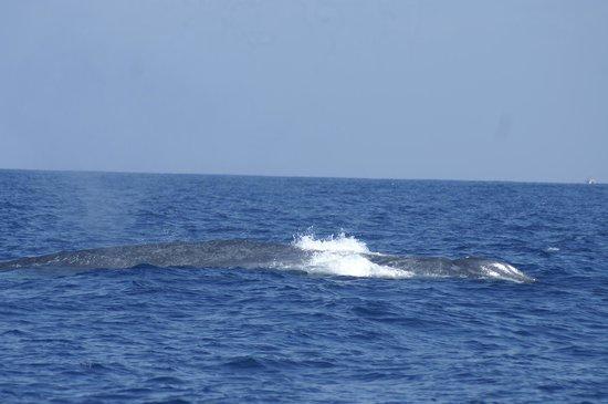Whale Watching Danushka