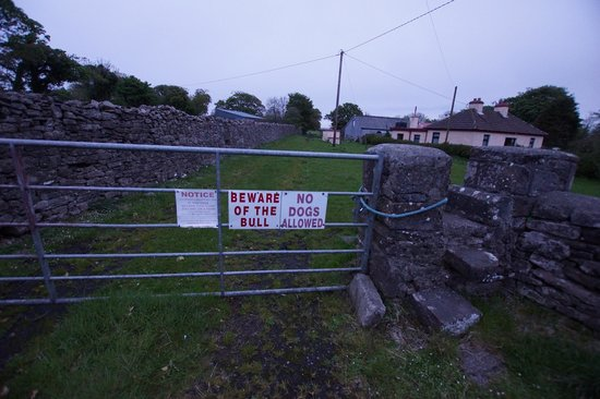 Beware of Bull... Moyne Abbey