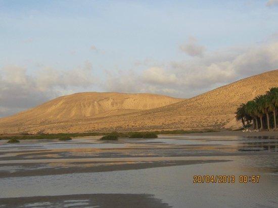 Melia Gorriones Fuerteventura: Vistas de la playa delante del hotel