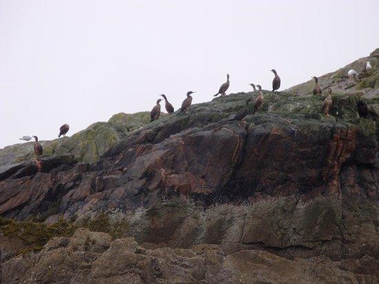 Gairloch Marine Life Centre & Cruises: some birds